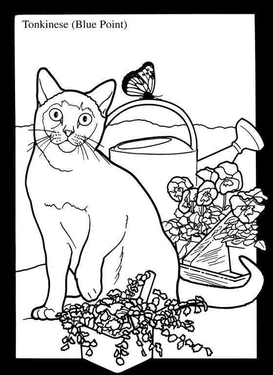 79 best advanced coloring animals images on pinterest | coloring ... - Advanced Coloring Pages Animals
