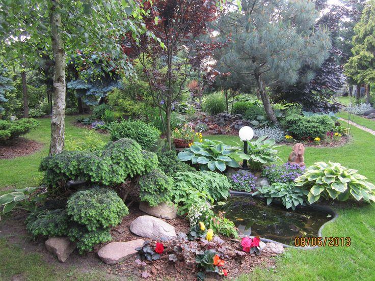 Mój ogród 2014