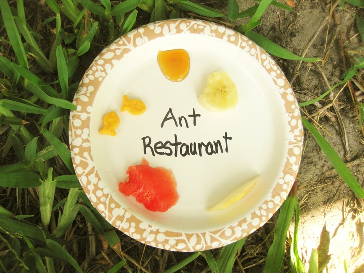 Pre-School Activity - Ant Restaurant  - useful for finding ants for our Ant Farm