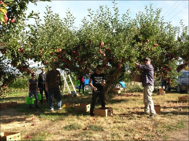 If you have a orchard, garden or yard teaming with fruit and you know you won't use it – there are people to pick it and a worthy place that needs it.