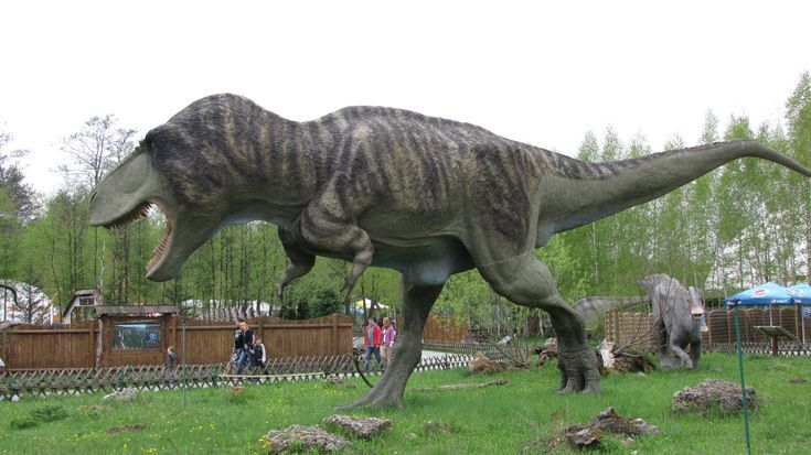 How Much Do You Really Know About Tyrannosaurus Rex?: The Average Tyrannosaurus Rex Lived About 30 Years