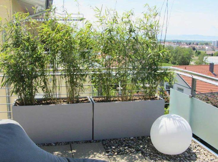 Bambus als Sichtschutz für Terrasse und Balkon | …