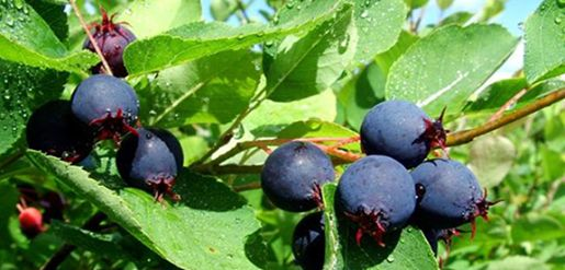 "Blog: ""Pick It Farm Fresh: Leelanau County U-Pick Farms and Orchards."""