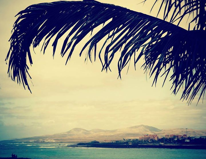 #Photography #Palm #Tree #Sea #Spain #Landscape #Opening
