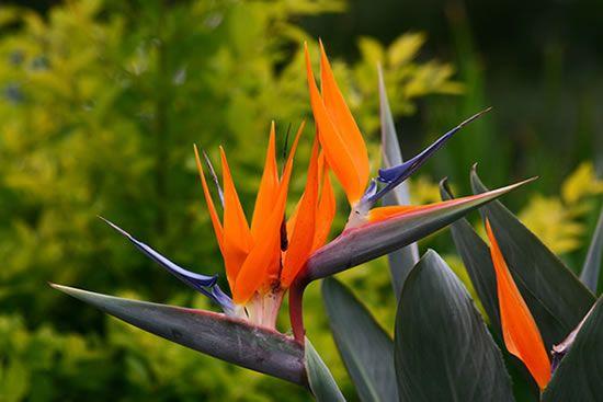 Como cultivar plantas e flores tropicais no seu jardim   O Meu Jardim