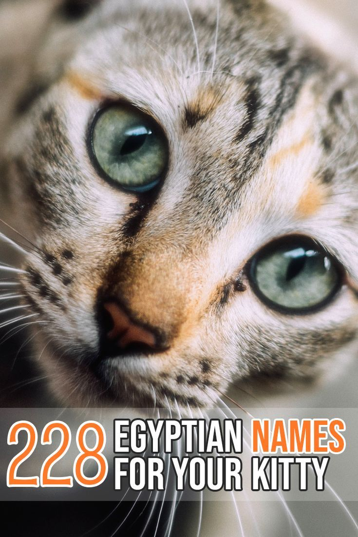 The Biggest list of Egyptian cat names for your kitty