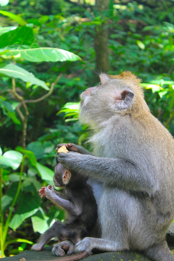 Mother and Child Monkeys admiring the greenery