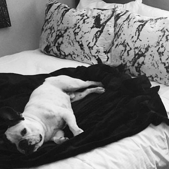 HUMP DAY MOOD 😴 #frenchbulldog #dogsofinstagram #marble #silk #beauty…