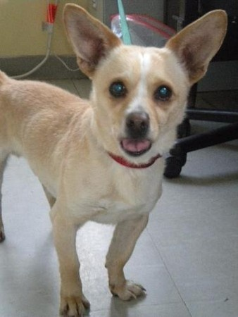 Woodbury Humane Society Adoptable Dogs