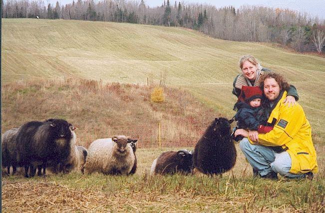Le Biscornu - éleveurs de moutons icelandics à Rimouski