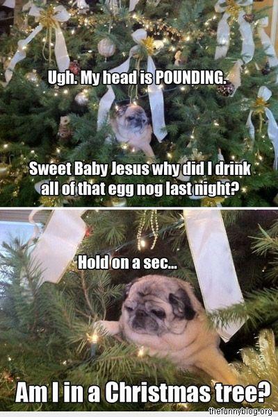drunk old grandpa pugChristmas Parties, Xmas Trees, Eggs, Funny Pics, Baby Jesus, Dogs Humor, So Funny, Pugs Life, Christmas Trees