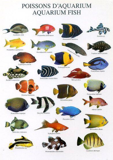 25 best Freshwater Fish images on Pinterest | Fish aquariums, Fish ...