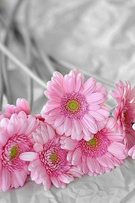 #Pink #daisy My United Colors of my // CHRIS ....
