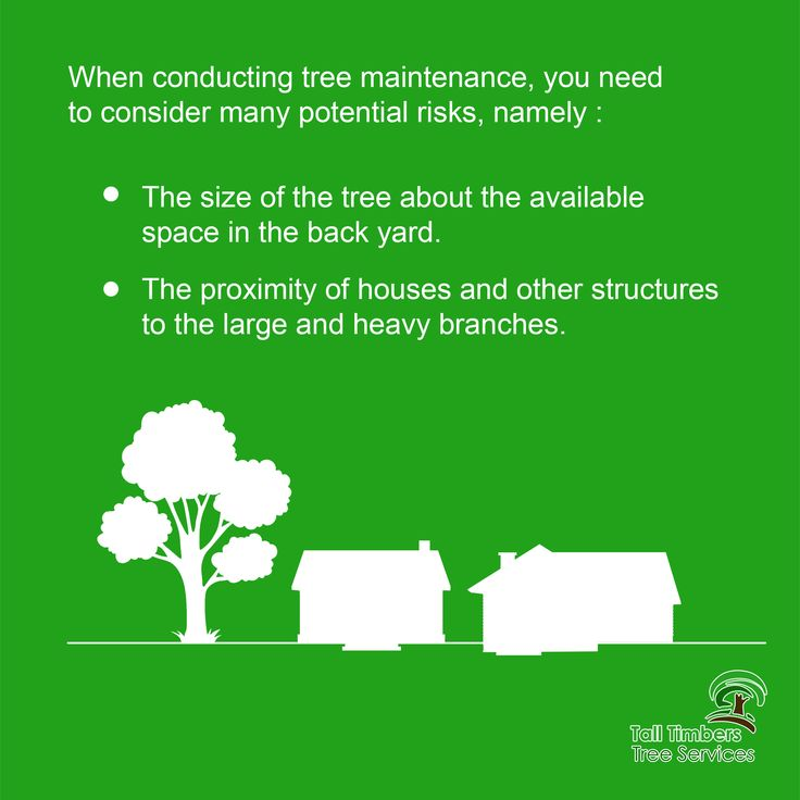 Tree maintenance tips. For more details click here ↓ https://talltimberstreeservices.com.au/