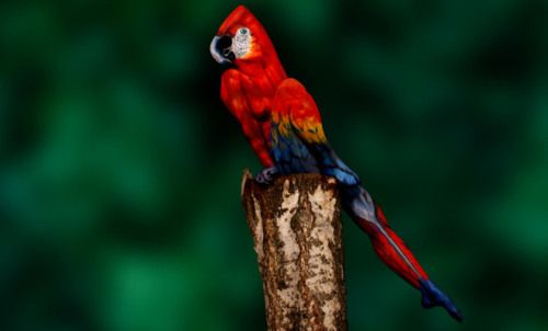 Illusions stimulate creativity, involvement and motivation. The parrot is a body-painted woman. Amazing.