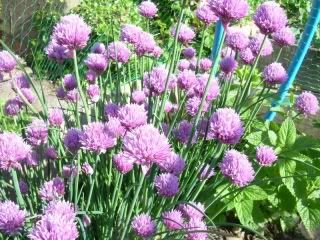 Blog All About Herbs: What Is Chives? Great blog post on how to grow chives!!