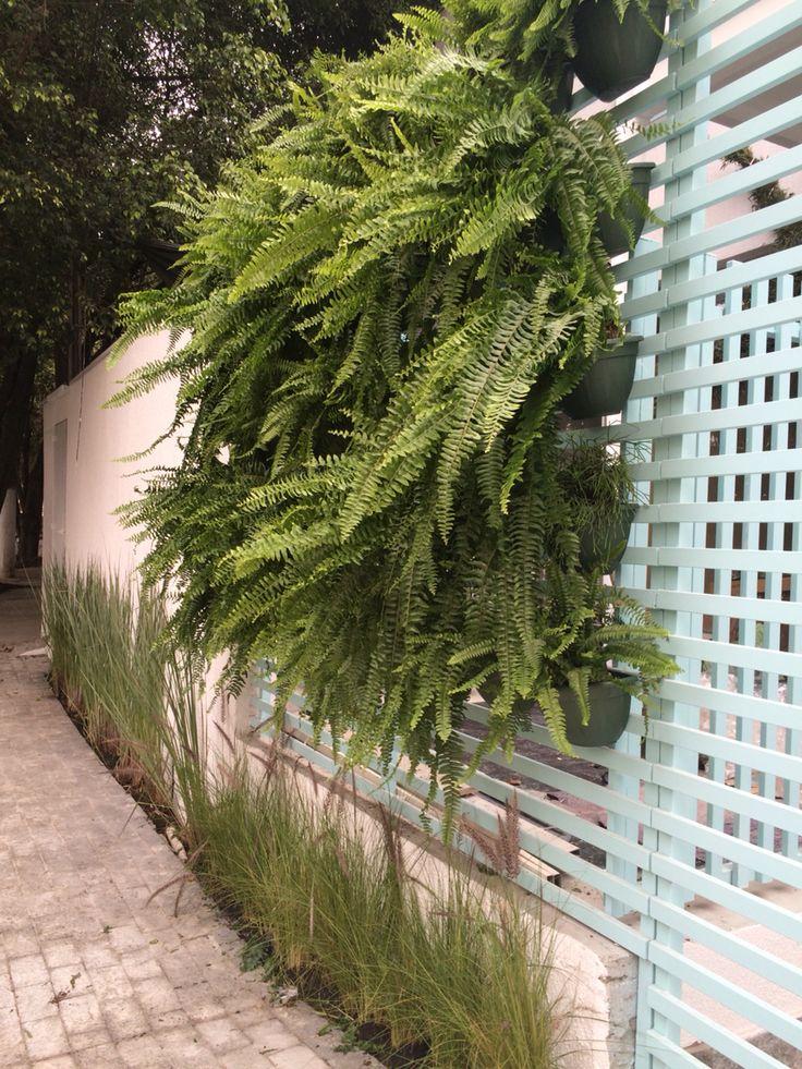 Nosso jardim vertical, feito com samambaias. Penduradas na parte externa da entrada da Escola, criando beleza ao ambiente e encantando a todos que passam!