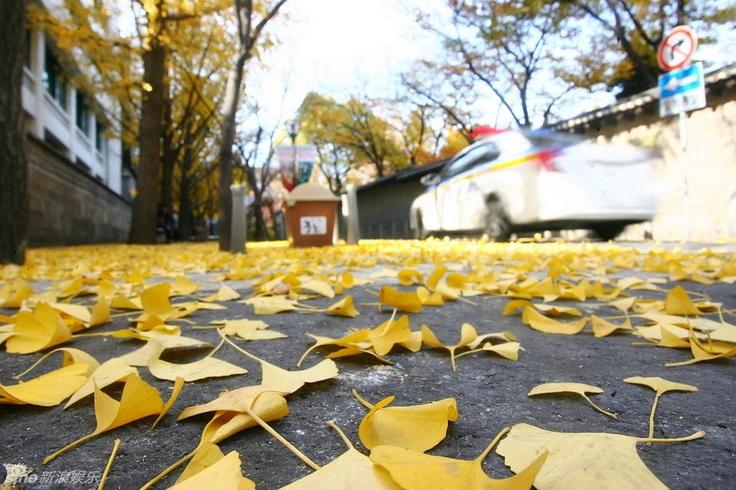 the beautiful autumn scenery in Seoul, capital of South Korea.