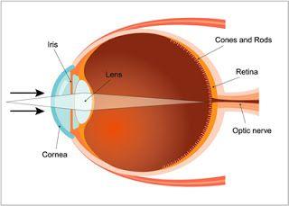 O olho humano: um órgão privilegiado