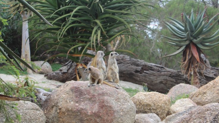 Africa en australia