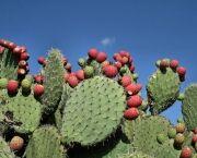 http://flores.culturamix.com/informacoes/como-plantar-mandacaru