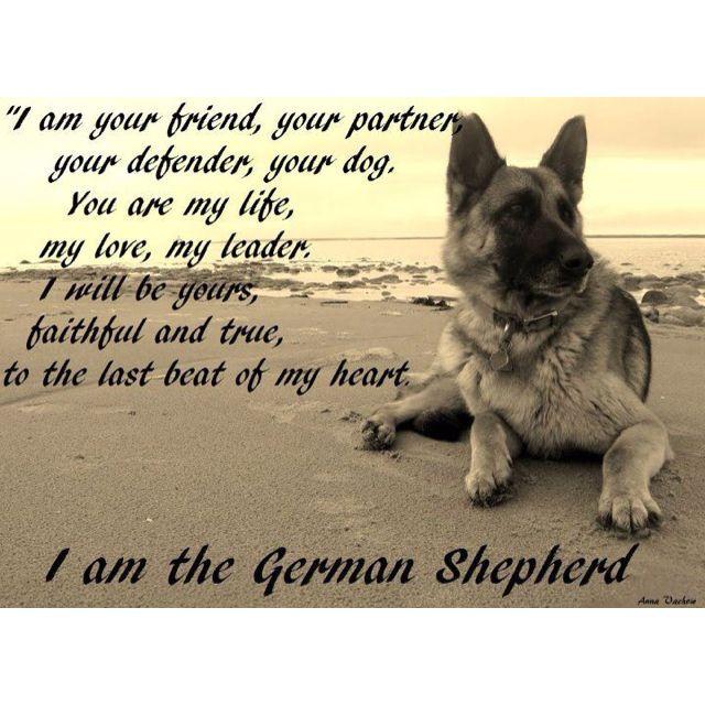 The German Shepherd Poem German Shepherds Pinterest