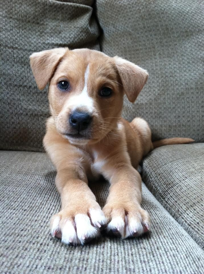 Puppy Love ~ a perfect pose!