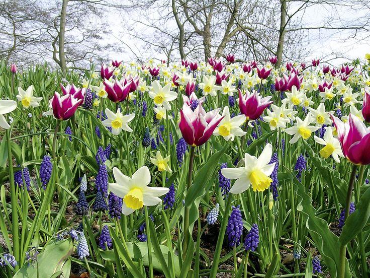 les 25 meilleures id es de la cat gorie jardin de tulipes sur pinterest fleurs de printemps. Black Bedroom Furniture Sets. Home Design Ideas