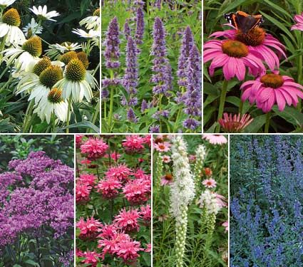 Hummingbird Butterfly Garden Butterfly Gardens Pinterest