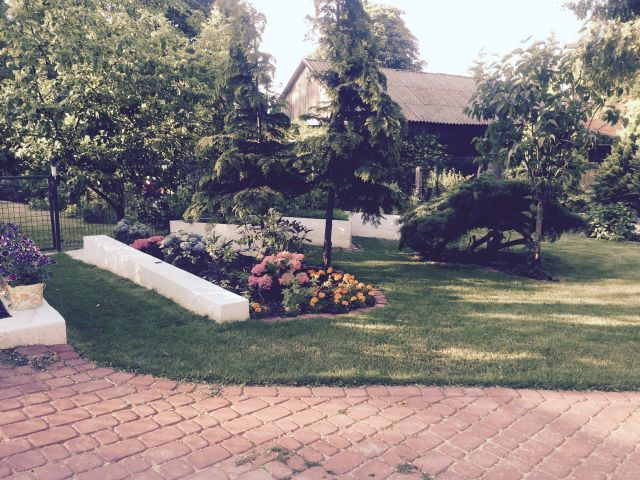 hortensje i trawnik --------------------------- hydrangeas and lawn
