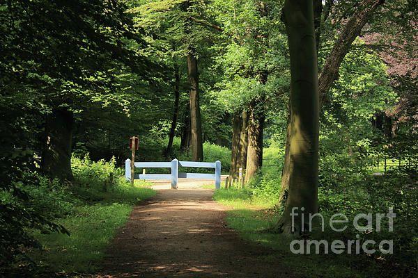 Nature Reserve Netherlands