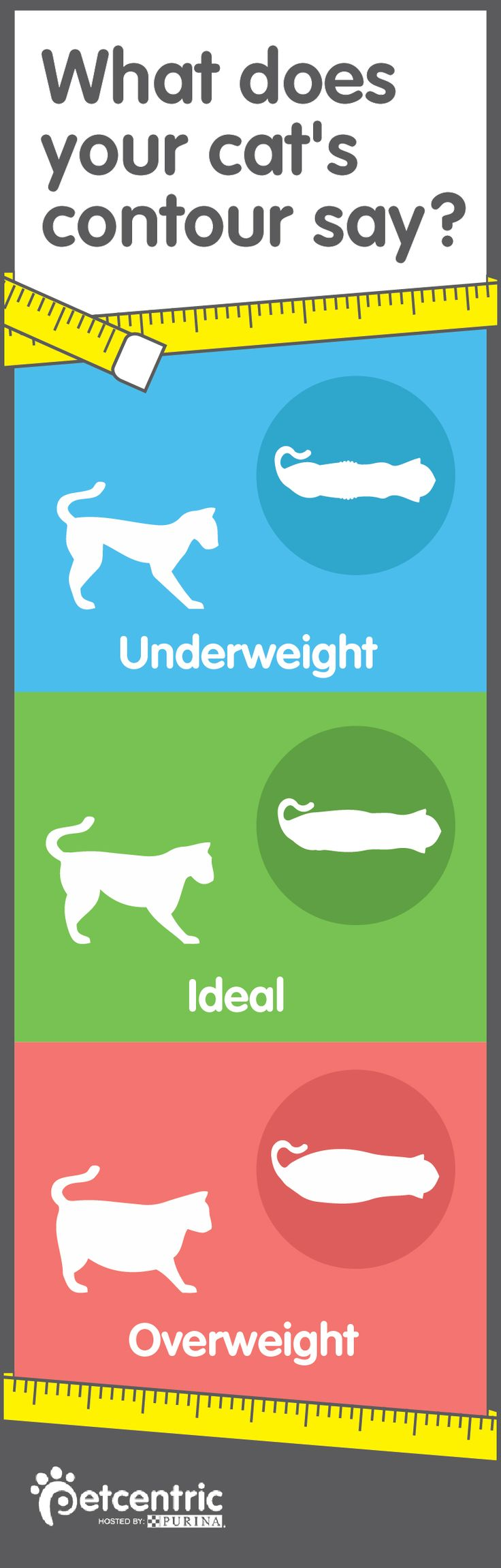 A proper diet will keep your best friend happy and healthy! Pin this and check out Petcentric.com so you can continue to see if your cat is underweight, overweight or just the right size. This is so helpful it even tells you what to do if your cat is at an unhealthy weight.