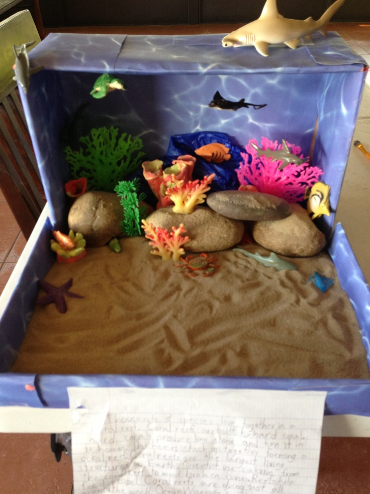 Coral Reef Habitat Project for kids