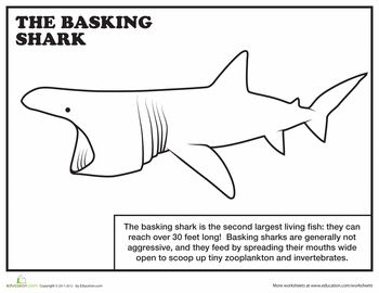 Worksheets: Basking Shark Coloring Page (writing prompt)