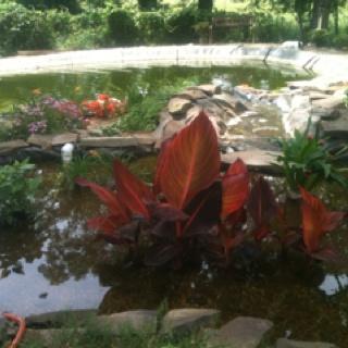 Koi ponds koi and ponds on pinterest for Koi pond bog filter