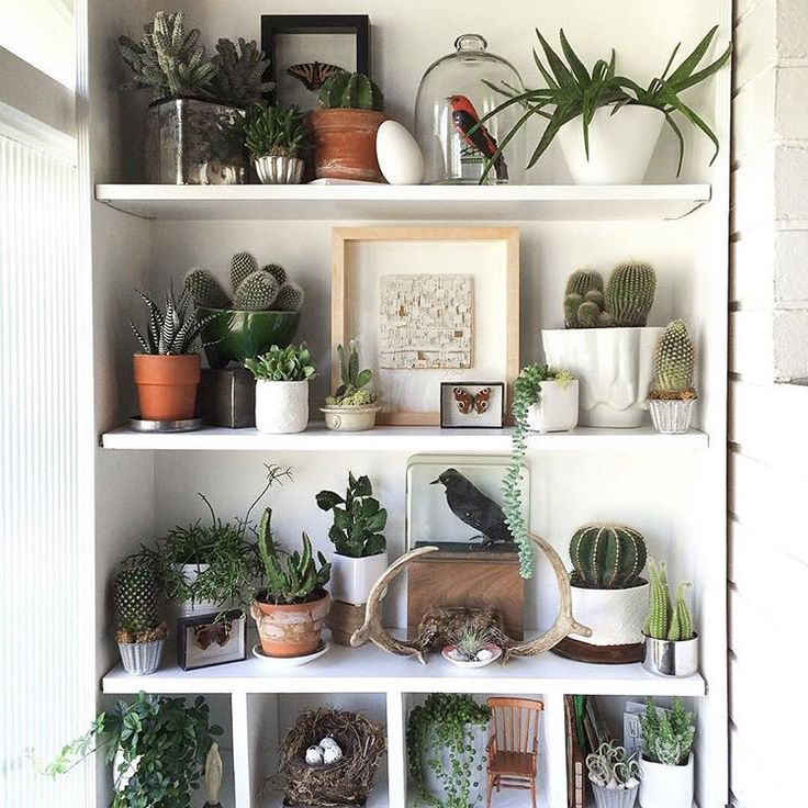 1000 Ideas About Plant Shelves On Pinterest Small