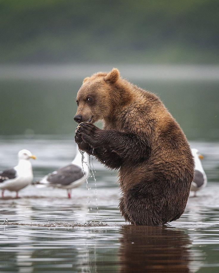 Картинки веселые медвежата, цветы