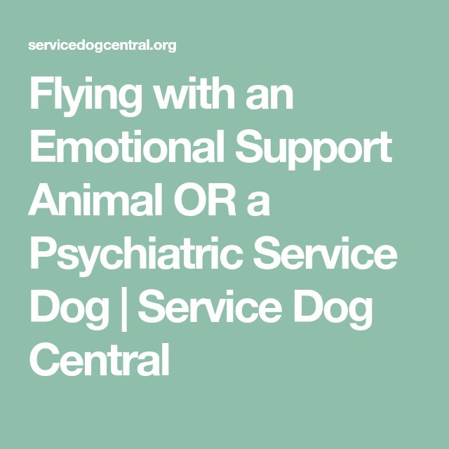 Flying with an Emotional Support Animal OR a Psychiatric Service Dog | Service Dog Central
