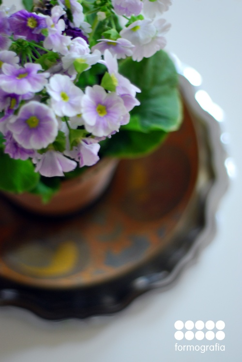 spring flowers in vintage pot