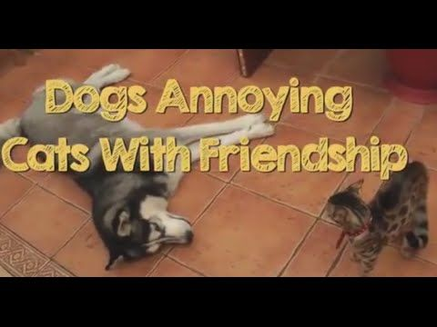 Youtube Com Dogs Annoying Cats With Friendship