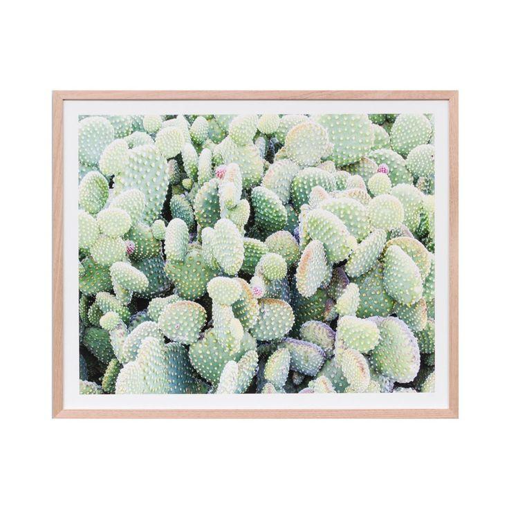 Cactus Garden – Jumbled