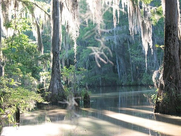 The oxbow swamps of the Cahaba River form part of Perry Lakes Park. The Cahaba ranks among the most biodiverse rivers in North America.