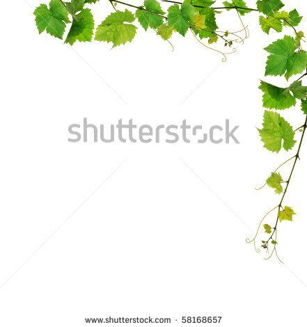 Wine Clip Art Borders | Grapevine border with fresh vine branches ...