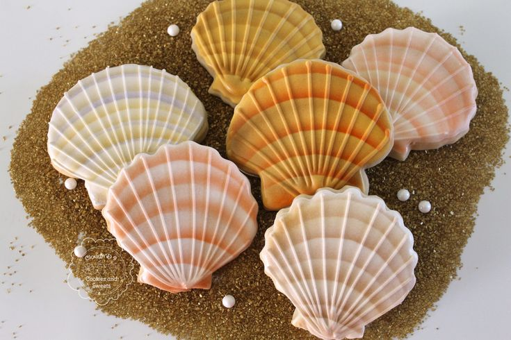 Airbrushed Seashells