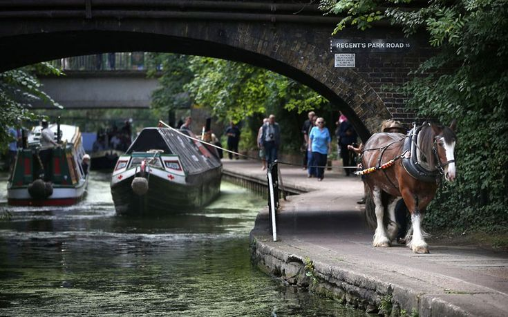 The Ilkeston, a restored narrow boat, is towed by Buddy, a 13-year-old Clydesdale horse, on Regent's Canal in London  Picture: Peter Macdiarmid/Getty Images