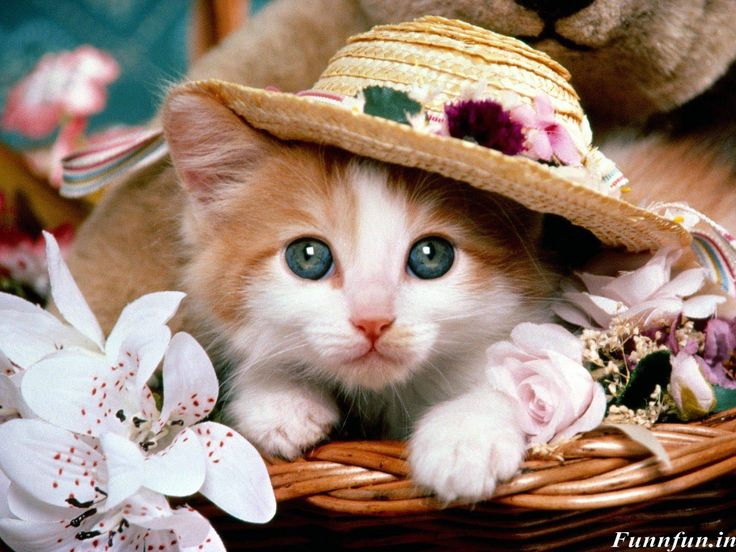 Cute Funny Wallpapers Free Download