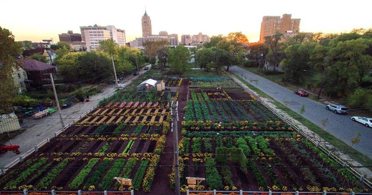 First Urban 'Agrihood' In America Feeds 2,000 Households For Free via @dailyhealthpost