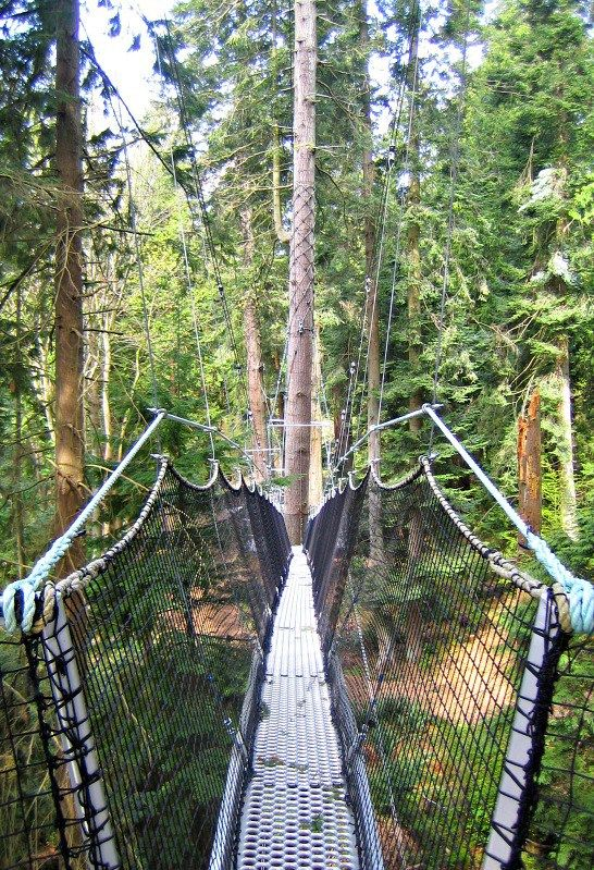 Take an exciting walk in the trees with your family at UBC's Greenheart Canopy…