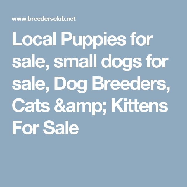 Local Puppies for sale, small dogs for sale, Dog Breeders, Cats & Kittens For Sale