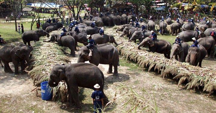 13 марта  Chang Day национальный день слона в Таиланде  Авиабилеты Москва - Бангкок от 24000 руб.  Любители слонов в Таиланде устраивают сегодня большую вечеринку для своих любимцев  Таиланд празднует День слона который отмечается ежегодно 13 марта в Королевстве.  В честь тайского слона этого самого нежного но мощного животного день 13 марта объявлен национальным Днем тайского слона или Chang Day.  Эмблемой дня выбран белый слон  символ Таиланда.  Как рассказали в Центре охраны тайских…